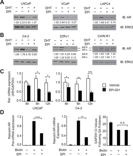 EPI-001 inhibits endogenous AR expression at the mRNA level.