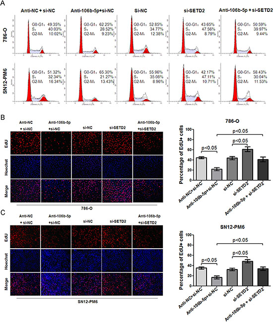 MiR-106b-5p antagomir induced cell cycle arrest and proliferation suppression through up-regulation of SETD2 expression in ccRCC cells.