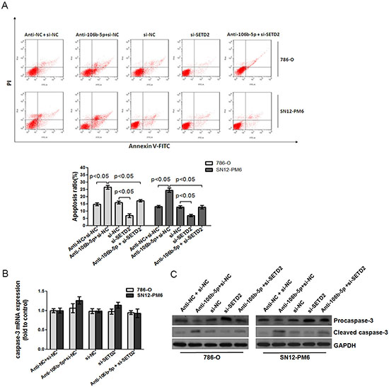 Attenuation of miR-106b-5p promoted caspase-3 mediated apoptosis through up-regulation of SETD2 expression.