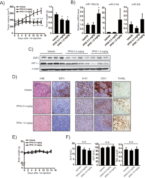 Inhibition of xenograft tumor growth by PPIX.