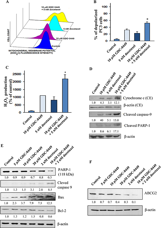 Stimulatory effect induced by GDC-0449 and docetaxel on mitochondrial membrane potential depolarization, production of reactive oxygen species and activation of caspase pathway in PC cells.