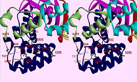 Cross-eye Stereo view of helices 1–6 of the CTD of SMYD3.