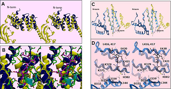 Residues within a degenerate tetratricopeptide (TPR)-like domain within the SMYD3 CTD mediate HSP90 interaction.