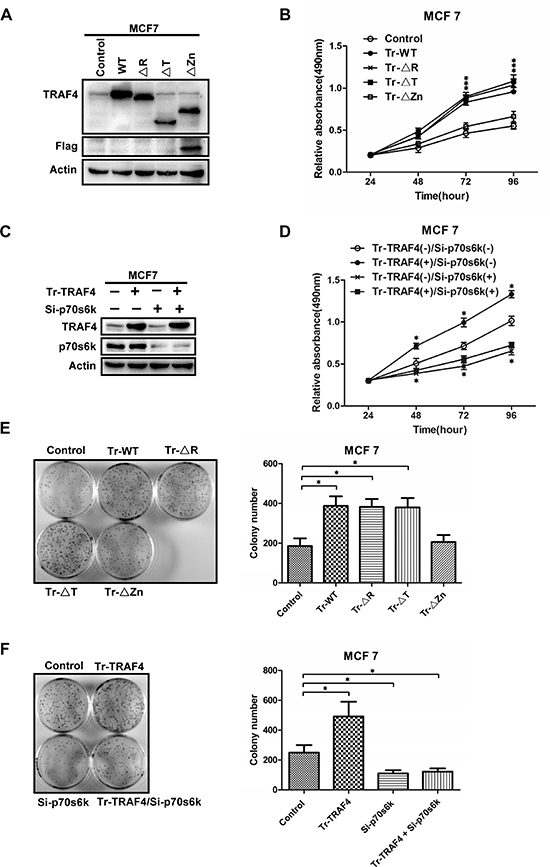TRAF4 promotes the proliferation of breast cancer cell mostly through mTOR/p70s6k/S6 signaling.