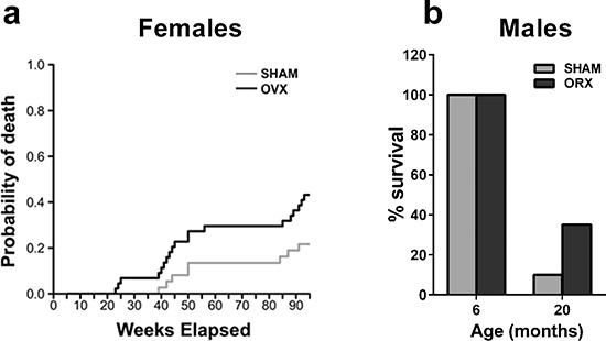 Gonadectomy and life span in female and male mice.