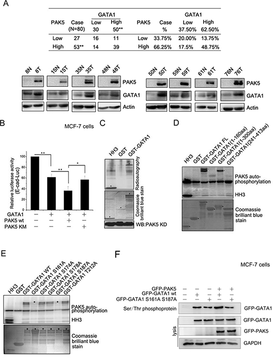GATA1 is a physiological substrate of p21-activated kinase 5.
