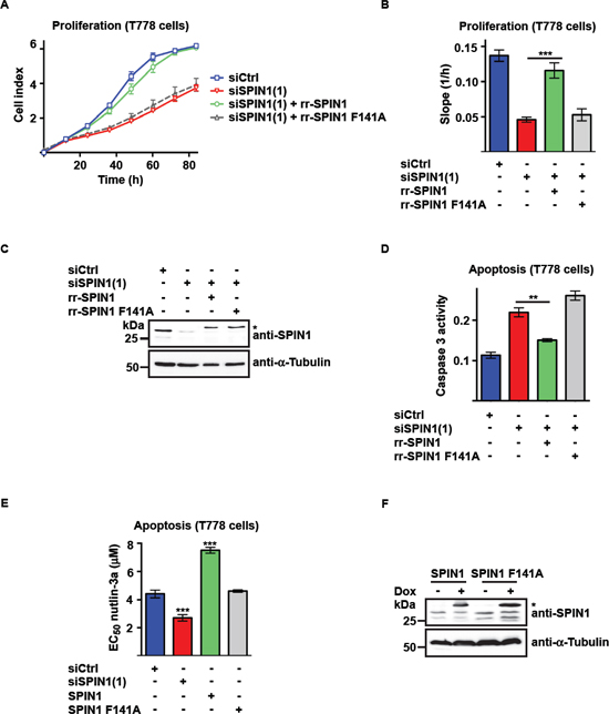 Binding of SPIN1 to H3K4me3 is required for proliferation and survival of liposarcoma cells.