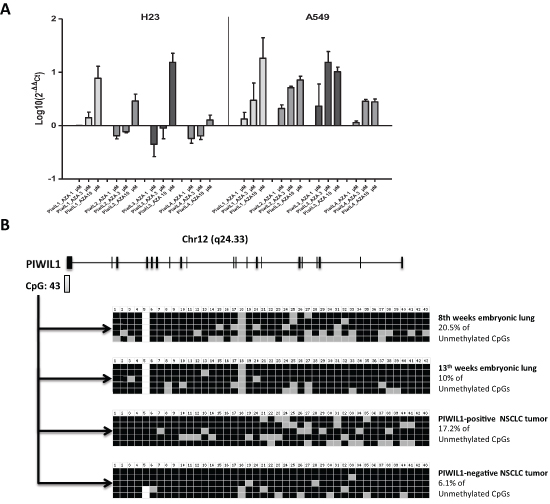 Study of the methylation of PIWI genes in lung cancer.