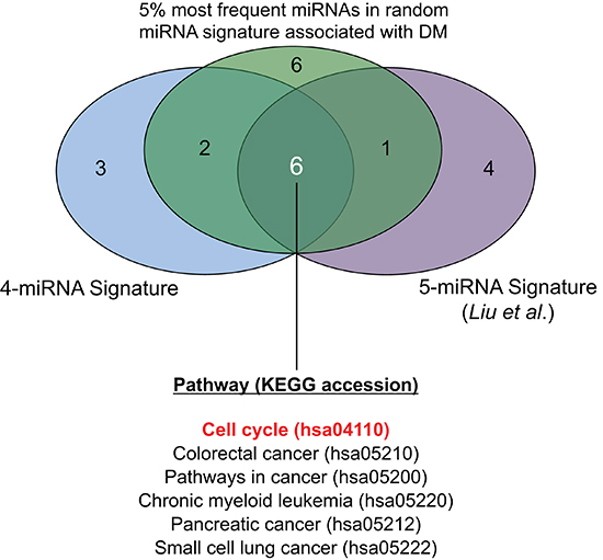 Venn diagram showing commonly and uniquely enriched pathways across three sets of miRNA-targets.