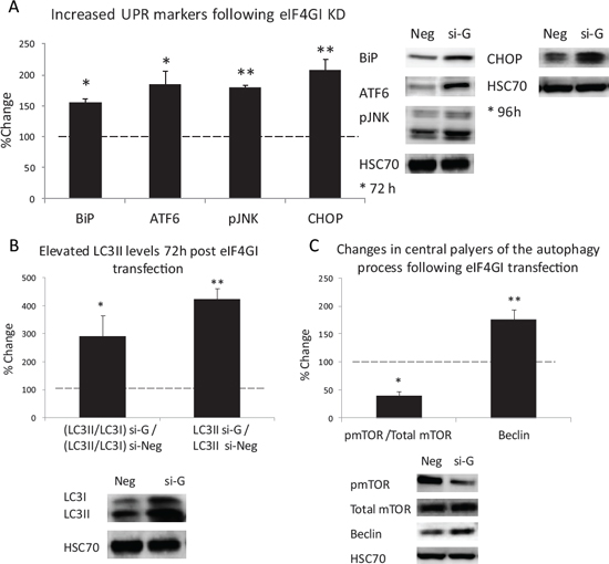 eIF4GI KD Increased ER-stress and UPR signaling and enhanced autophagy response in RPMI 8226 MM cell line.