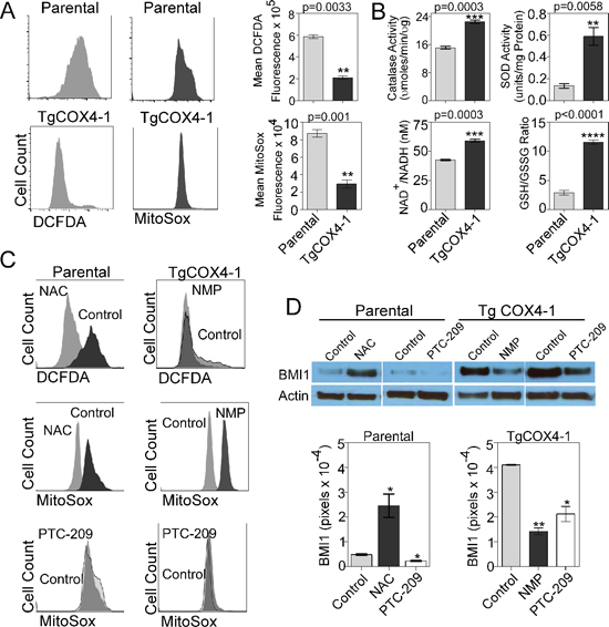 Mitochondrial ROS regulates BMI1 expression.