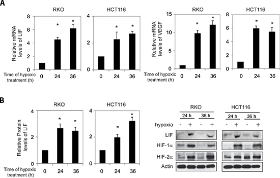 Hypoxia induces LIF expression levels in human colorectal cancer cell lines.