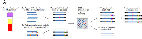 Multiplexed SCODA mutation enrichment and detection assay.