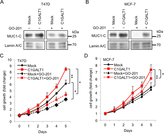C1GALT1 promotes cell growth through MUC1-C pathway.