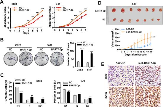 EBV-miR-BART7-3p promotes NPC cell growth and tumorigenesis.