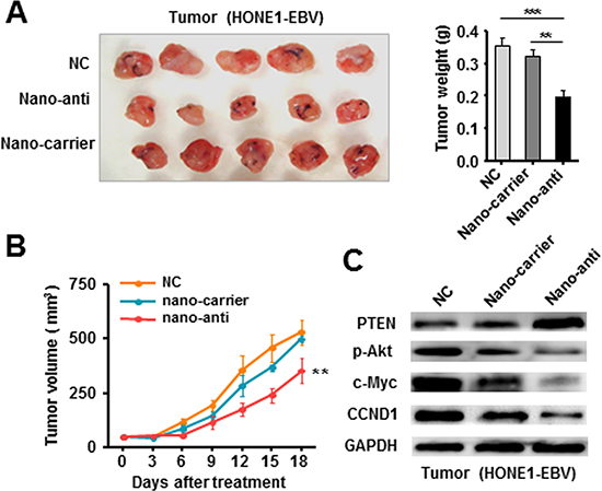 Therapeutically Silencing of EBV-miR-BART7-3p inhibited tumorigenicity of EBV-positive NPC cells in vivo.