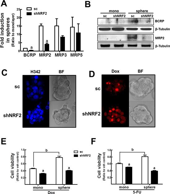 NRF2 knockdown-mediated sensitization of mammospheres to anticancer drugs.
