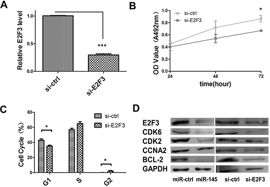 miR-145 inhibits cell proliferation through E2F3 dependent cell cycle regulation.