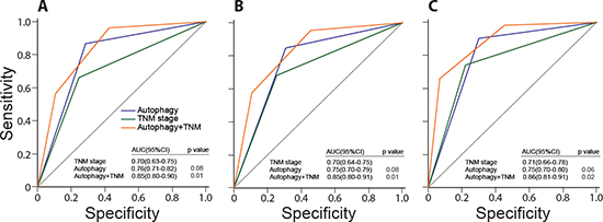 Comparisons of the sensitivity and specificity for the prediction of overall survival by the combined autophagic-protein signature and TNM stage model, the TNM stage alone model, and the autophagic-protein signature alone.