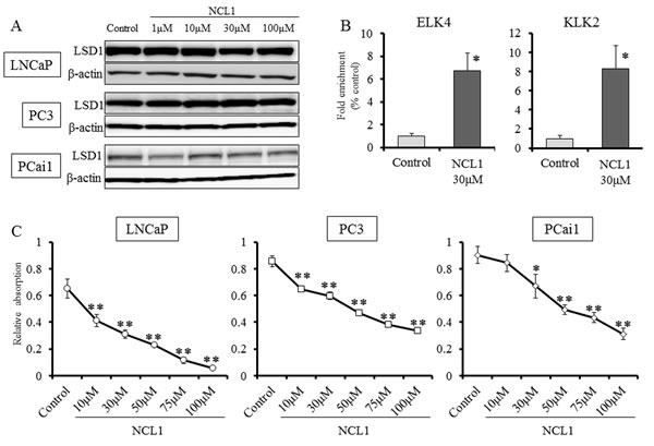 Inhibition of LSD1 functions reduced the proliferation of prostate cancer cell lines.