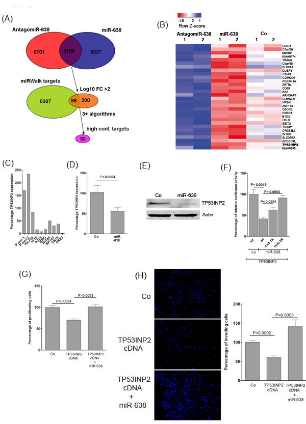miR-638 promotes proliferation and invasion by directly targeting TP53INP2 .