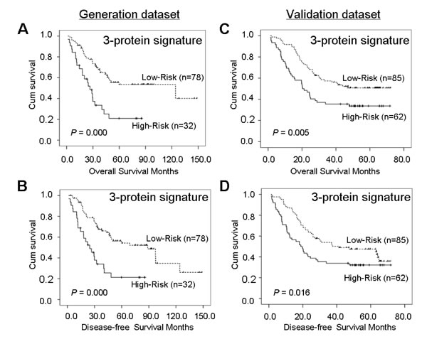 Kaplan-Meier analyses of overall survival and disease-free survival for the three-protein signature model in the generation dataset of 110 cases (A and B) and in the validation dataset of 147 cases (C and D).