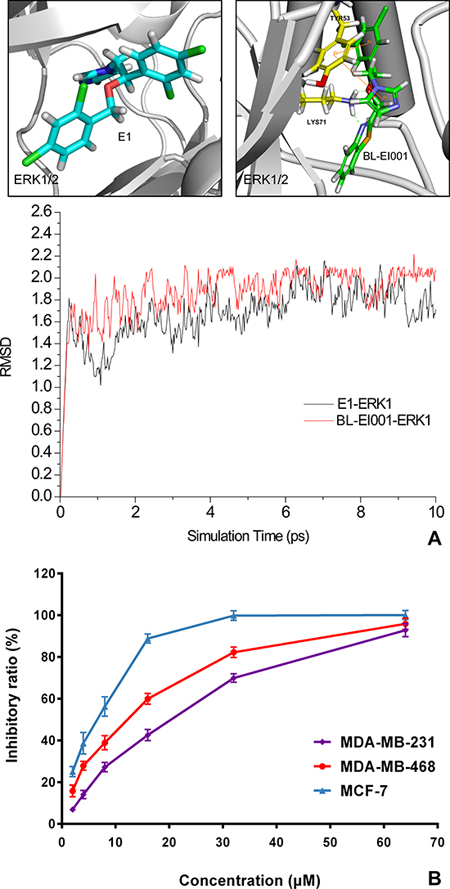 Molecular dynamics (MD) simulation and anti-proliferative activities of E1 and BL-EI001.