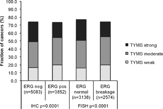 Association between TYMS expression levels and ERG-fusion state.