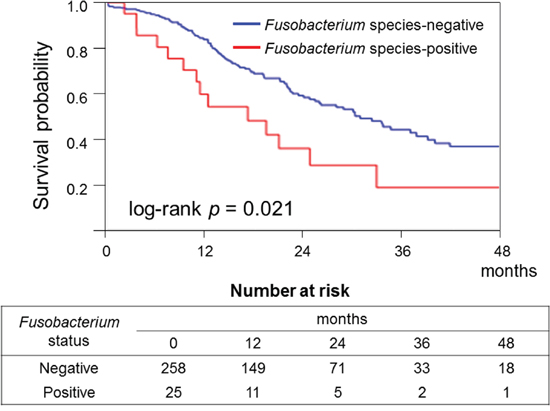 Kaplan–Meier curves of cancer-specific survival of patients with pancreatic cancer according to tumor Fusobacterium species status.