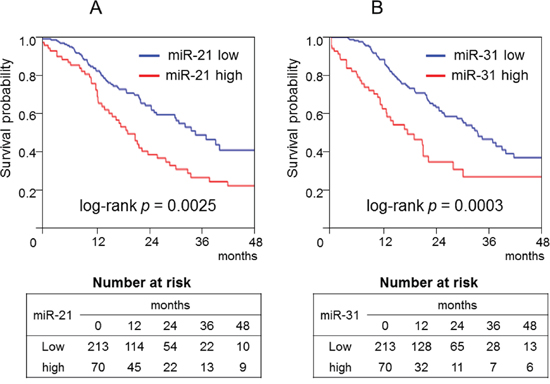 Kaplan–Meier curves of cancer-specific survival of patients with pancreatic cancer according to the amount of microRNA-21 (A) or microRNA-31 (B).