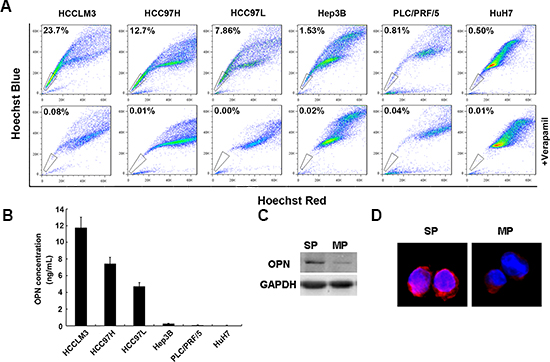 OPN expression is high in a side population of HCC cells.