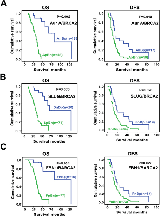 Association of the expression ratios between Aurora-A, SLUG, or FBN1 and BRCA2 with patient survivals.