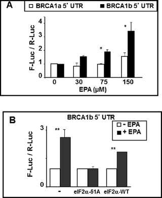 BRCA1 mRNAb 5'UTR confers EPA-induced translational up-regulation to reporter genes.