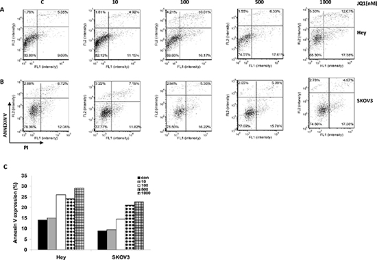 JQ1 induced cellular apoptosis in a dose dependent manner.