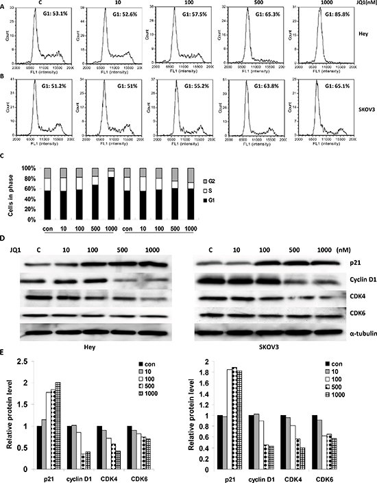 JQ1 induced cell cycle arrest in a dose dependent manner (range 0 to 1000 nM) in human ovarian cancer cell lines.