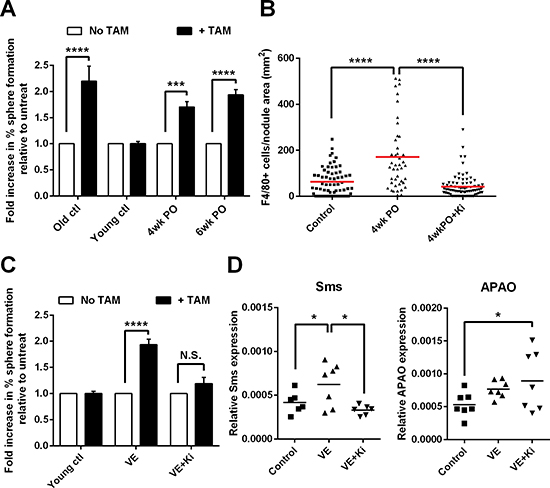 Surgery accelerates the emergence of macrophage-responsive tumor-initiating cells.