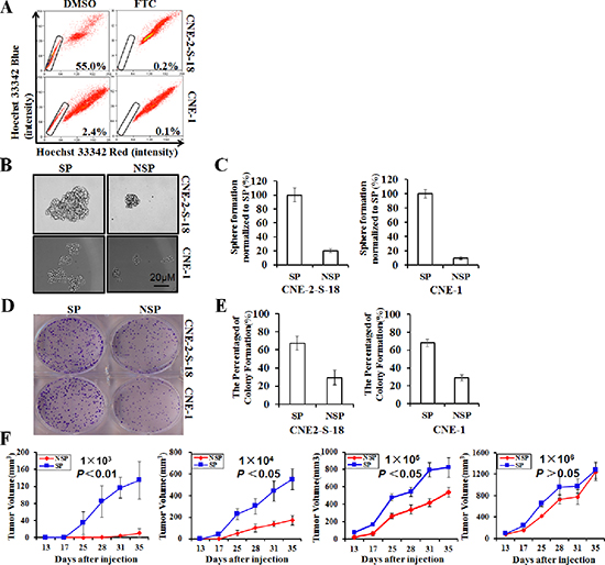 Identification and characterization of cancer stem-like SP cells in NPC cell lines.