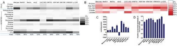 Distribution of carbon from glutamine in melanoma cells and melanocytes emphasizes role of glutamate secretion.