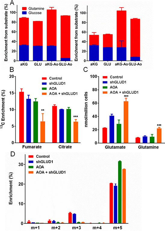 Testing the metabolic functions of aminotransferases and glutamate dehydrogenase (GLUD1) in Lu1205 cells.