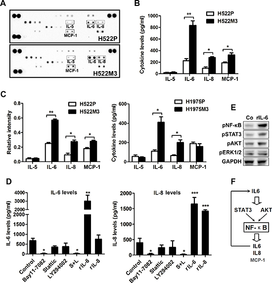 An IL6-NF-κB inflammatory loop is activated in aggressive NSCLC cells.
