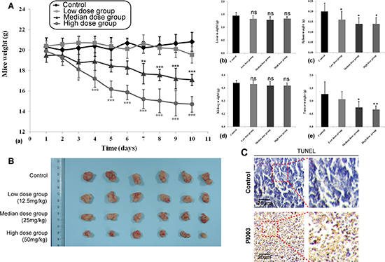 Anti-tumor activities of PI003 in in vivo mouse models.