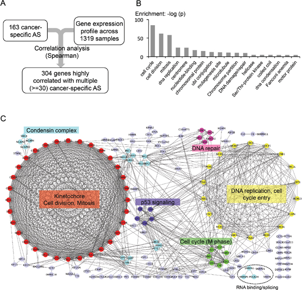 Genes associated with cancer-specific AS events.