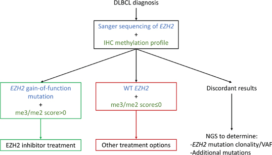 An IHC/Sanger combination approach as a decision aid for EZH2 inhibitor treatment.