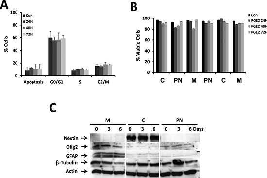 Effect of PGE2 on cell cycle, survival and expression of stemness markers.