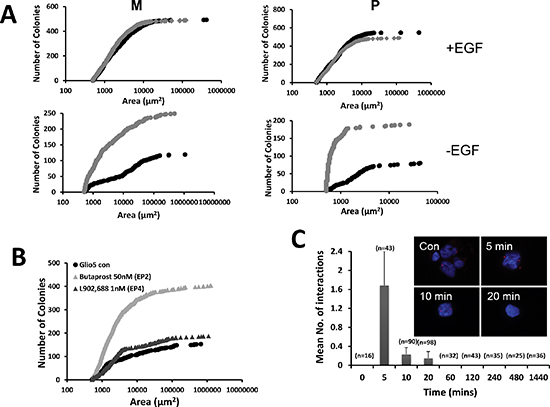 PGE2 and the EGF signaling pathway.
