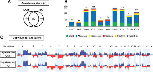 Genomic similarities of synchronous DCIS and IDC.