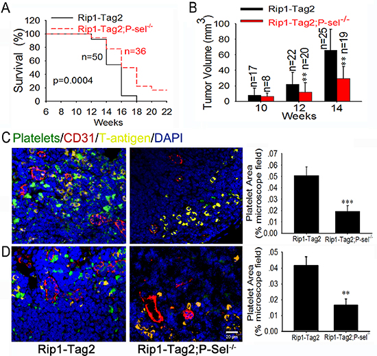 P-selectin mediates platelet deposition and promotes insulinoma growth.