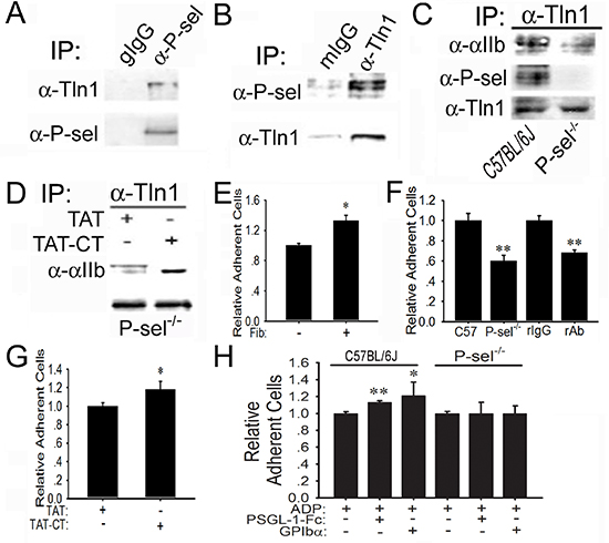 Induction of P-sel-CT-talin1-β3 complex in platelets.