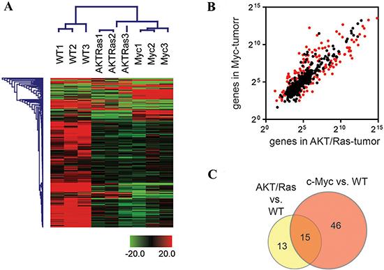 c-Myc and AKT/Ras induced liver tumors exhibit distinct miRNA profiles.