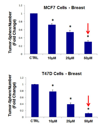 Tigecycline dose-dependently inhibits tumor-sphere formation in MCF7 and T47D cells, two commonly used ER(+) breast cancer cell lines.